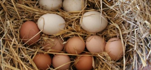 kana-muna-toit-sook-toiuaine