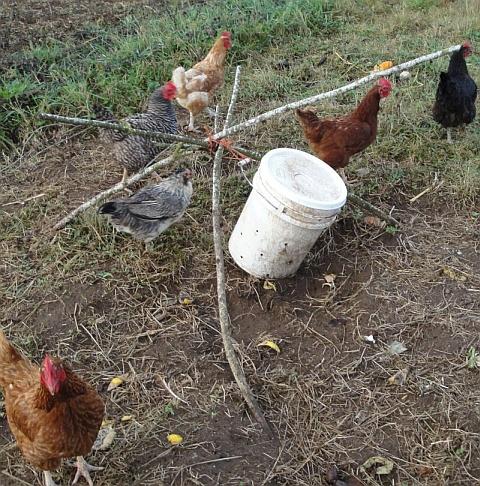 karbse-vastsed-tougud-sootmine-kanad