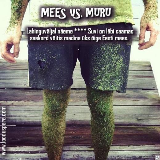Mees-vs-muru