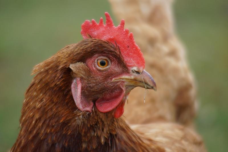 Vana kana