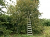Sarapuu - pähklisaak - korjamine