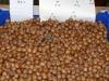 Sarapuude viljakandmise statistika